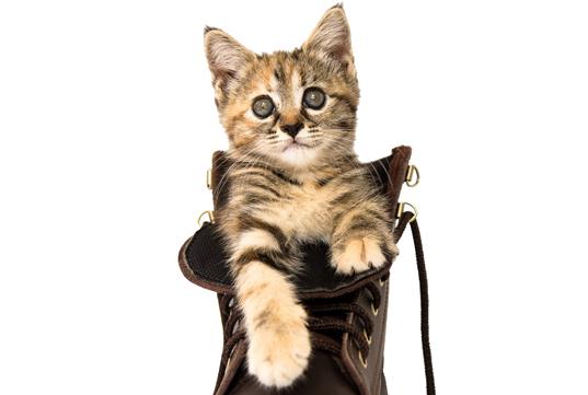 Cuidado gatos a Domicilio