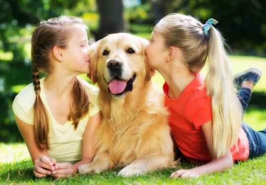 Entrenamiento mascotas
