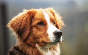 cuidados para tu perro en Medellín